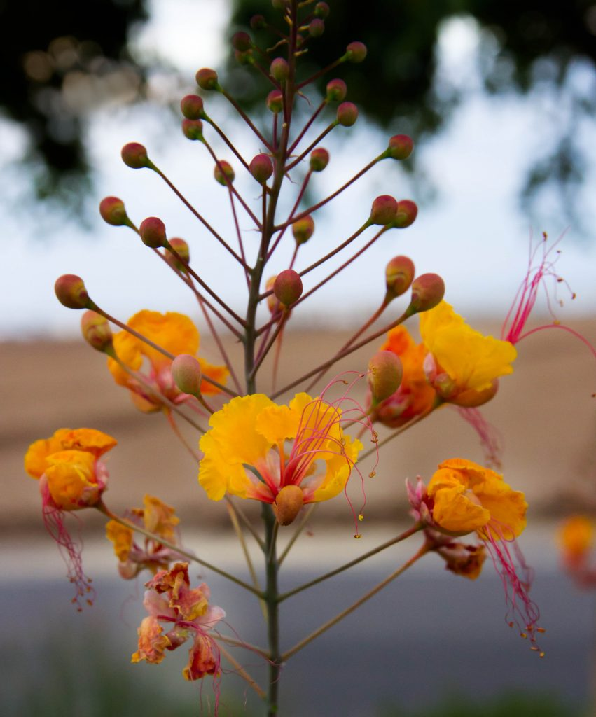 flowers-4-851x1024.jpg