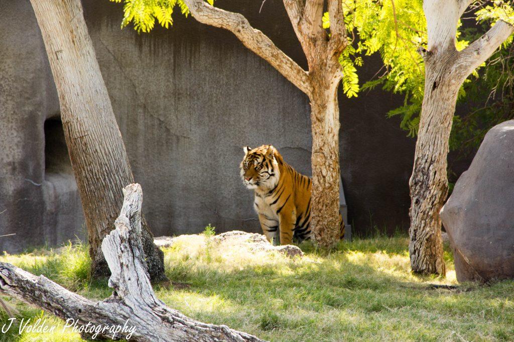 Phoenix-Zoo-104-1024x683.jpg