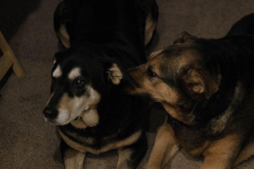 dogs-2-1024x683.jpg