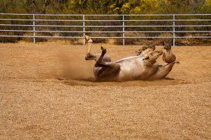 dynamite riding